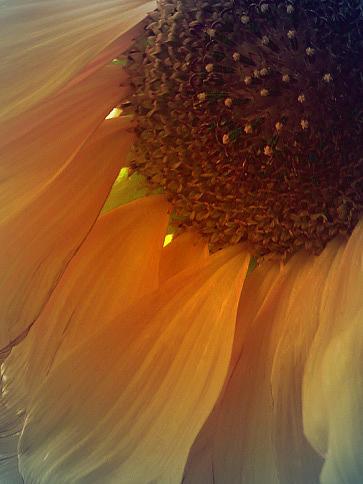 Lovelight Photograph