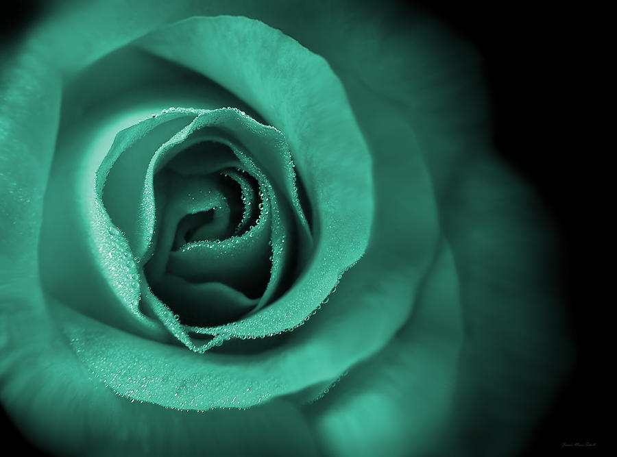 Loves Eternal Teal Green Rose Photograph