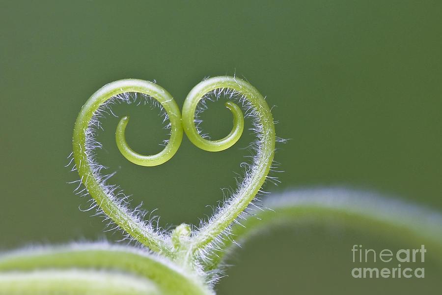 Loving Nature Photograph