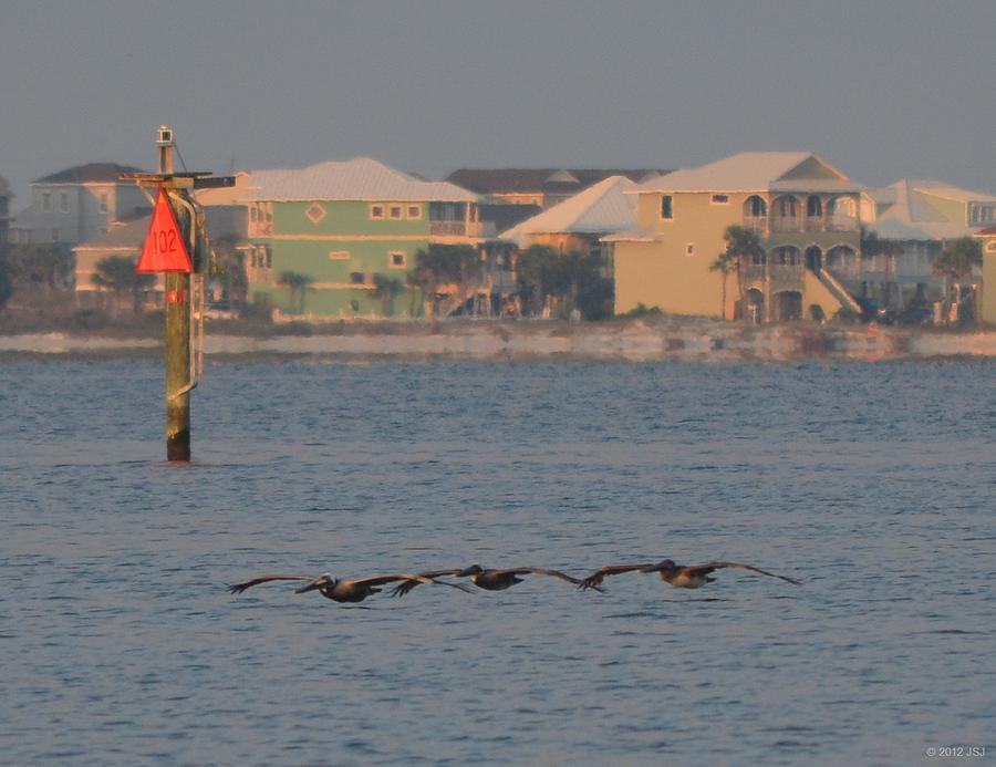 Low-level Pelicans In Echelon Left Formation Photograph