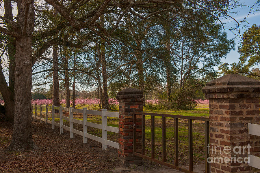 Lowcountry Gates To Boone Hall Plantation Photograph