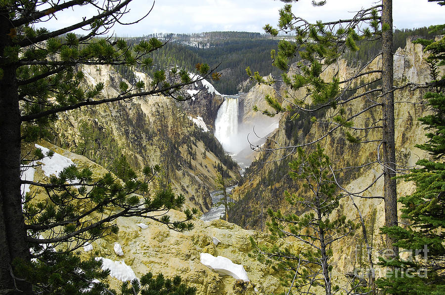 Lower Falls From Artist Point Yellowstone National Park Photograph  - Lower Falls From Artist Point Yellowstone National Park Fine Art Print