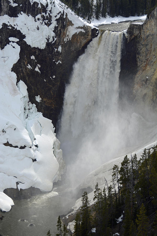 Lower Falls Of The Yellowstone In Spring Photograph