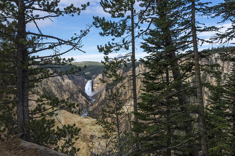 Lower Yellowstone Canyon Falls Waterfall Landscape Yellowstone National Park Wyoming Photograph - Lower Yellowstone Canyon Falls - Yellowstone National Park Wyoming by Brian Harig