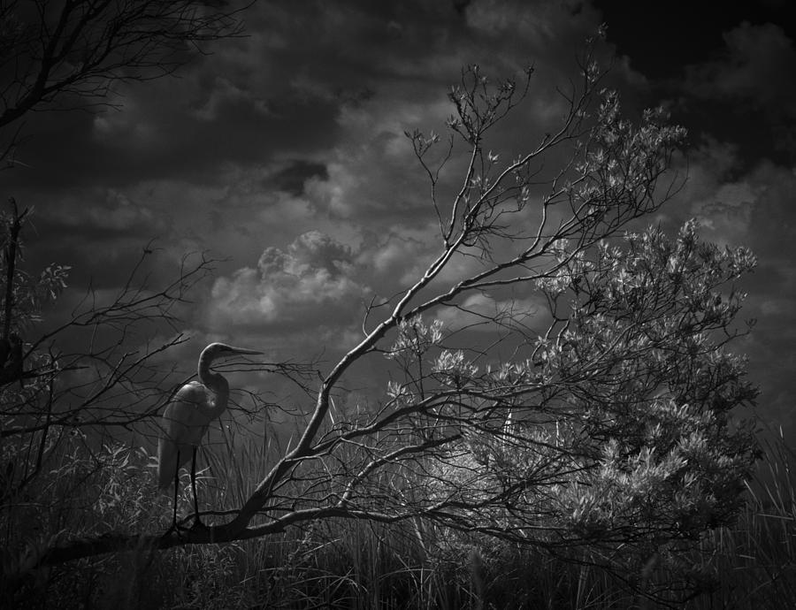 Loxahatchee Heron At Sunset Photograph