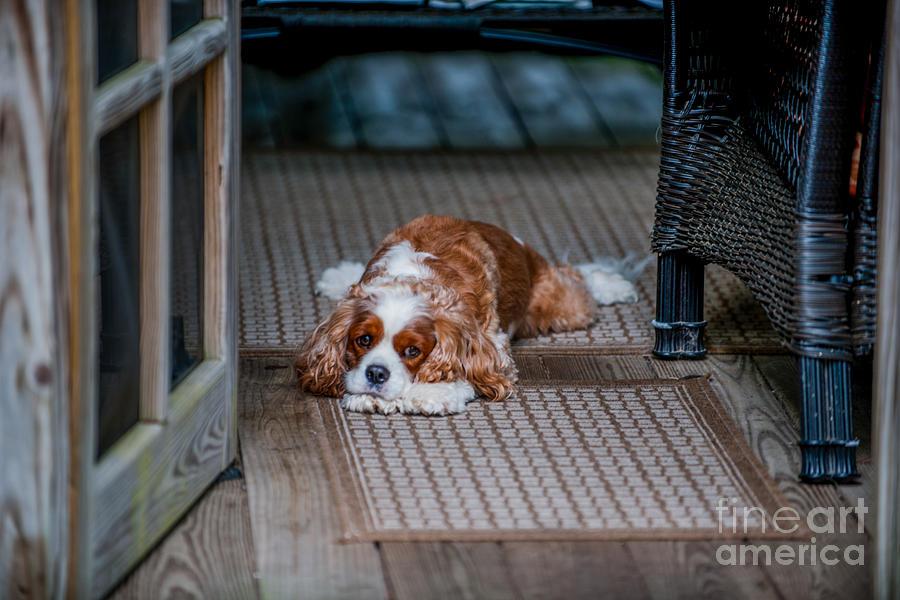 Loyal Pup Photograph