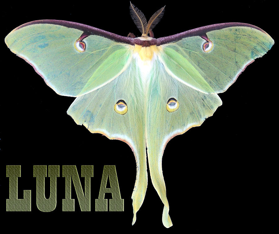 Luna 1 Photograph