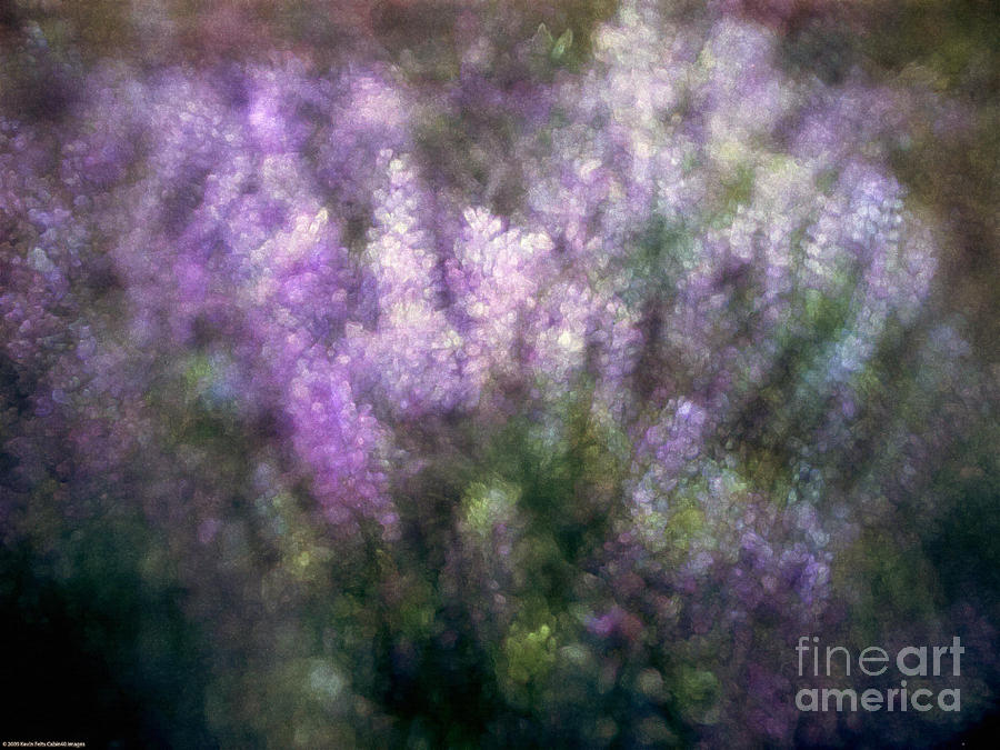 Lupine By The River  Photograph