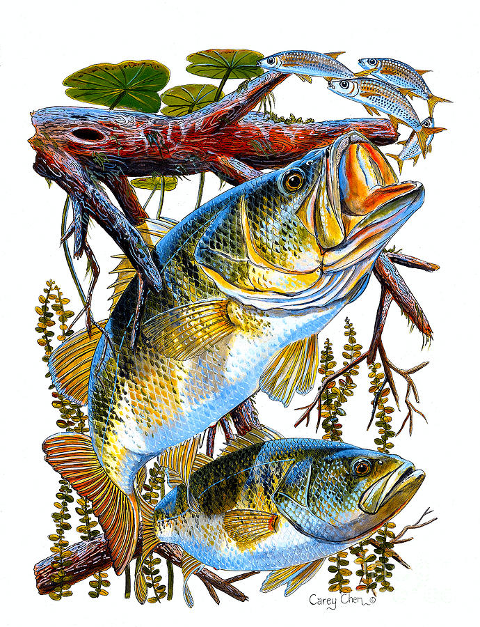 Lurking Bass Painting  - Lurking Bass Fine Art Print