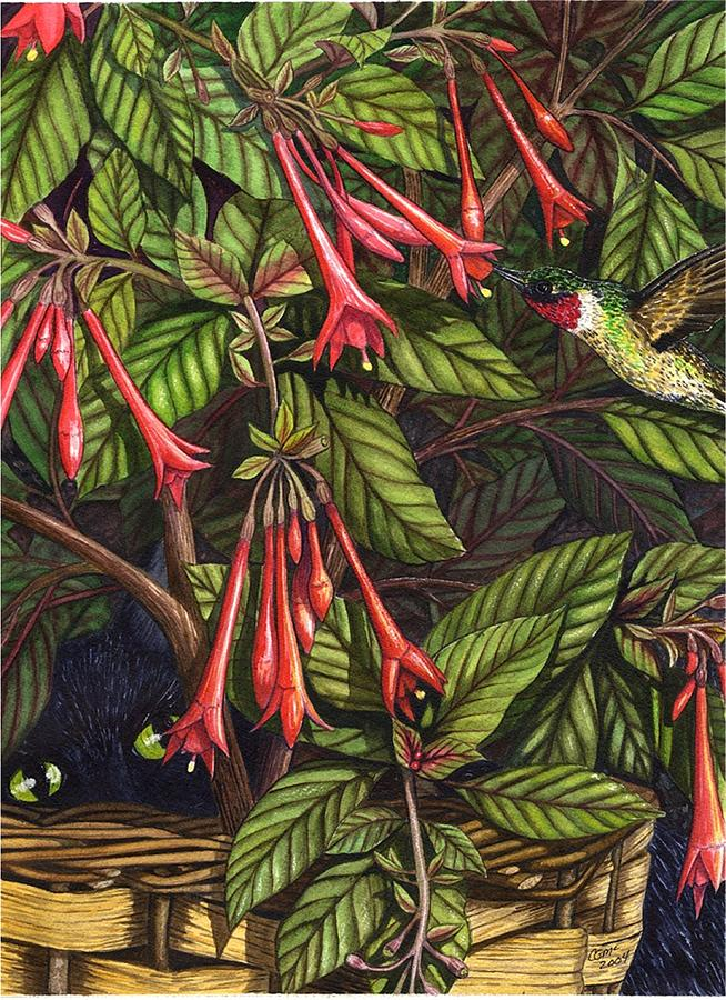 Fuchsia Painting - Lurking by Catherine G McElroy