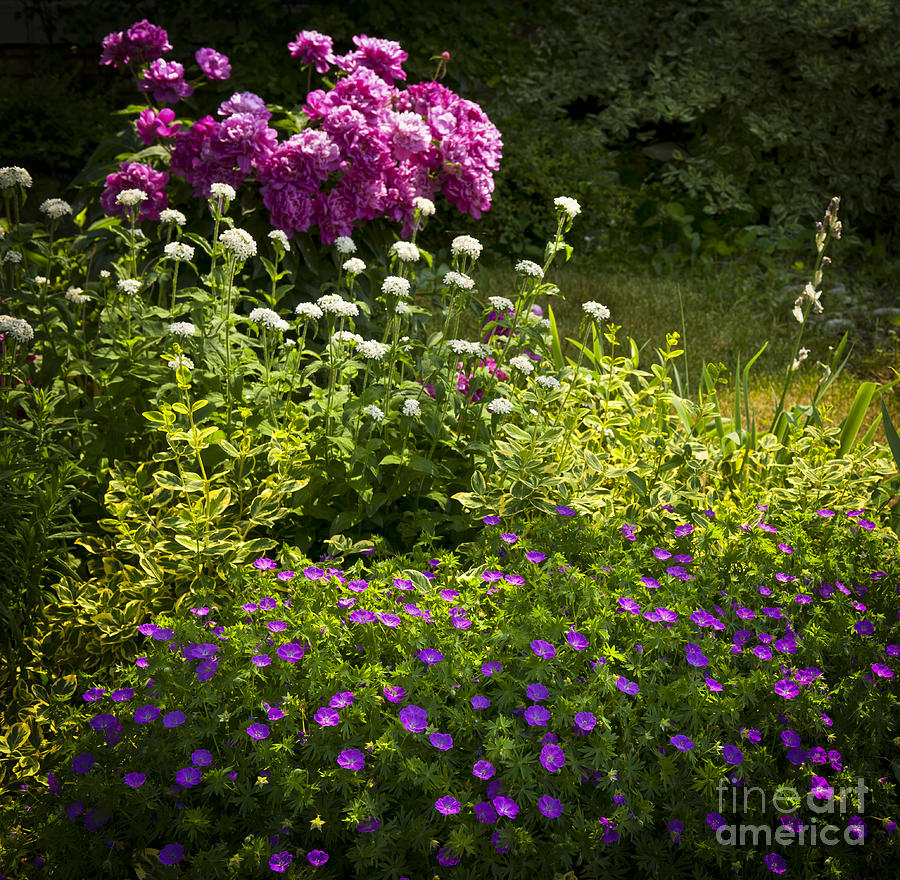 Lush Blooming Garden  Photograph