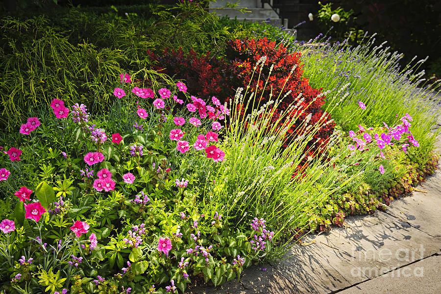Lush Garden Photograph