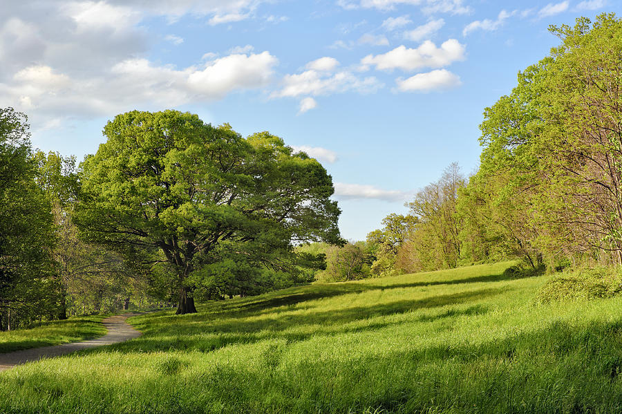 Lush Green Spring Landscape Photograph by Marianne Campolongo