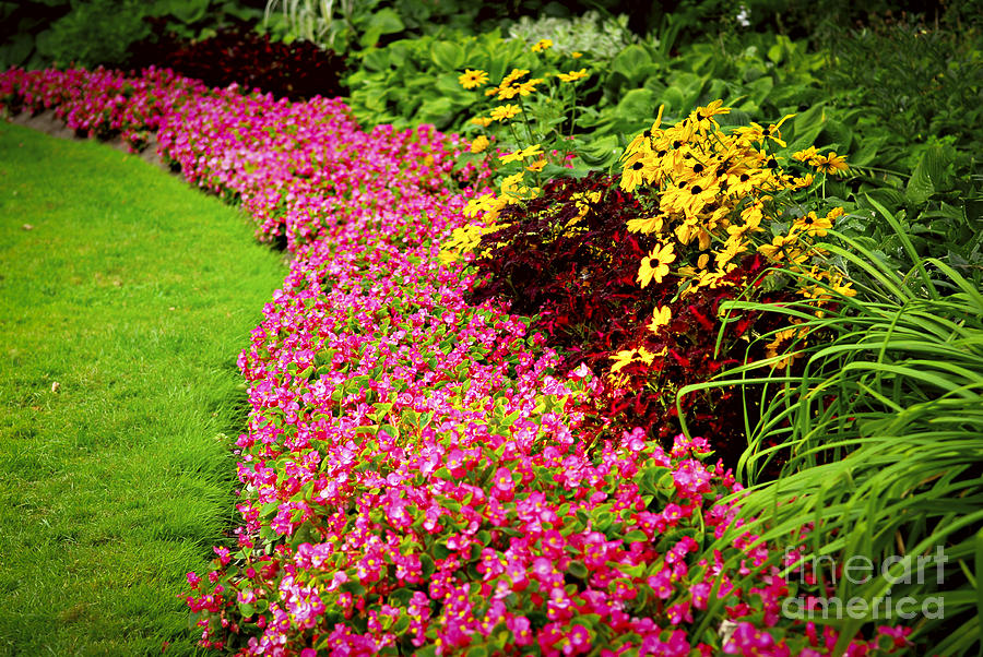 Lush Summer Garden Photograph