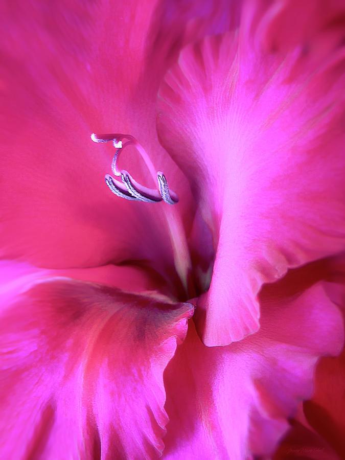 Gladiola Photograph - Magenta Splendor Gladiola Flower by Jennie Marie Schell