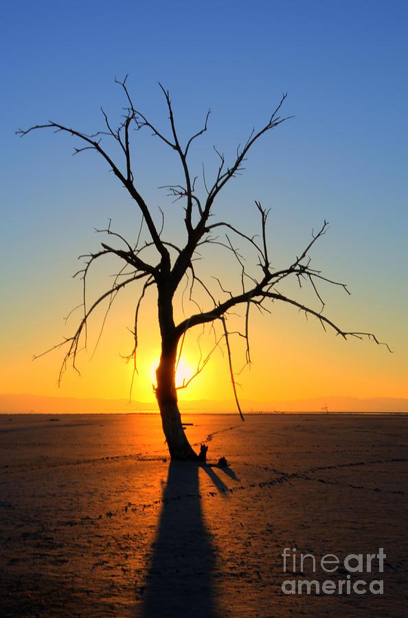 Tree Photograph - Magic At The Salton Sea by Bob Christopher