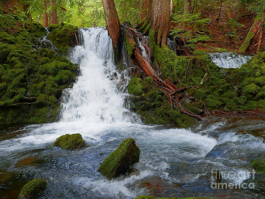 Magic In The Forest - Waterfall Photography Photograph  - Magic In The Forest - Waterfall Photography Fine Art Print