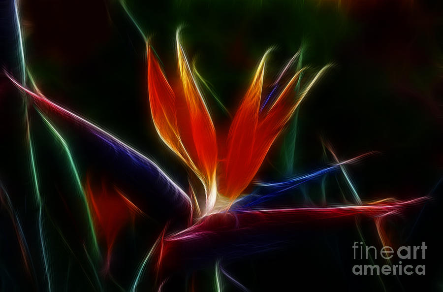 Magical Bird Of Paradise Photograph  - Magical Bird Of Paradise Fine Art Print