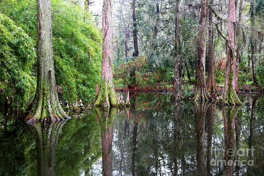Magical Cypress Swamp Photograph