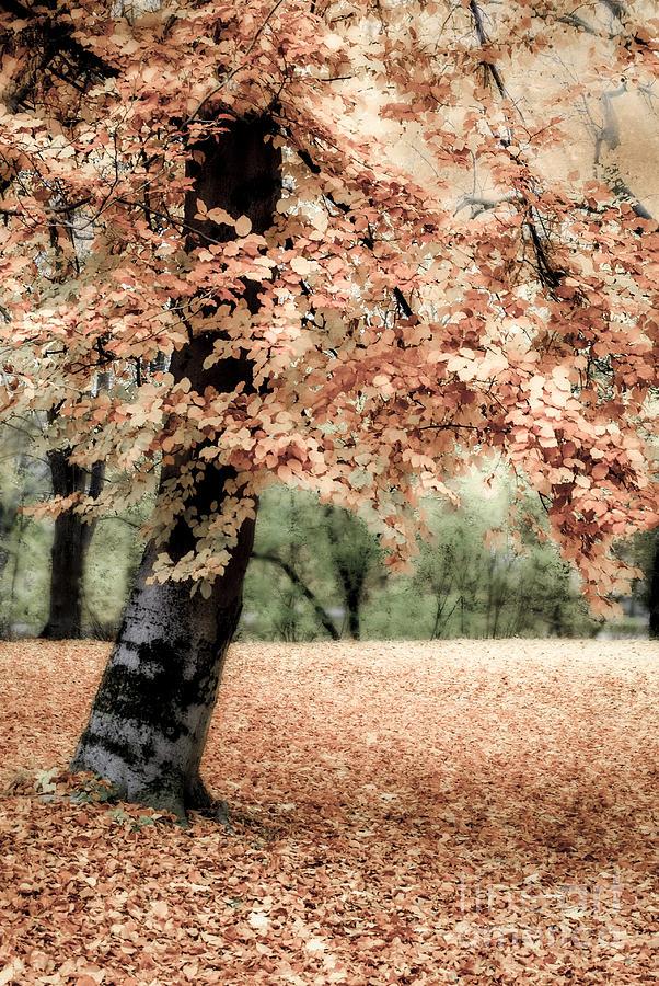 Magical Fall Photograph