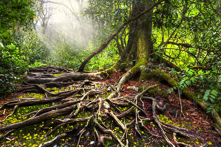 Magical Light On The Appalachian Trail Photograph