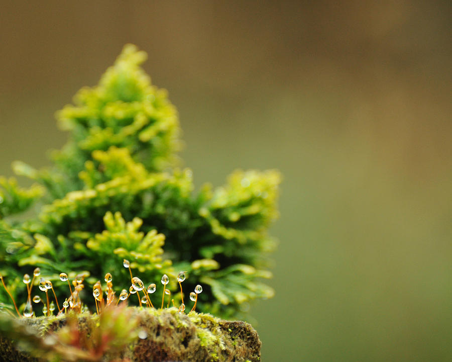 Miniature Landscape Photograph - Magical World Of Green And Gold by Rebecca Sherman