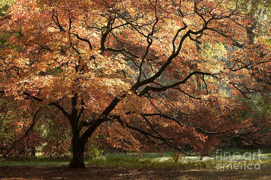 Magnificent Autumn Photograph