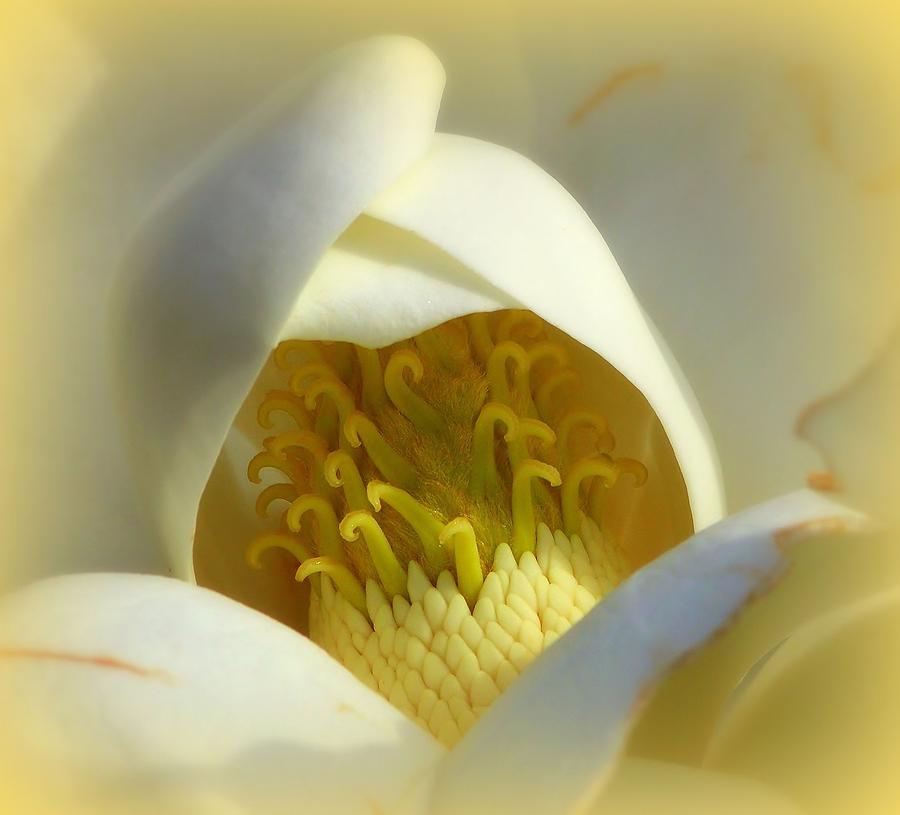 Magnolia Cloud Photograph