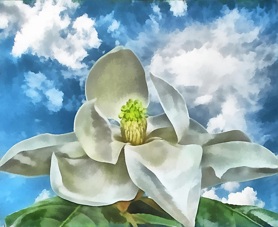 Magnolia Dreams Photograph  - Magnolia Dreams Fine Art Print