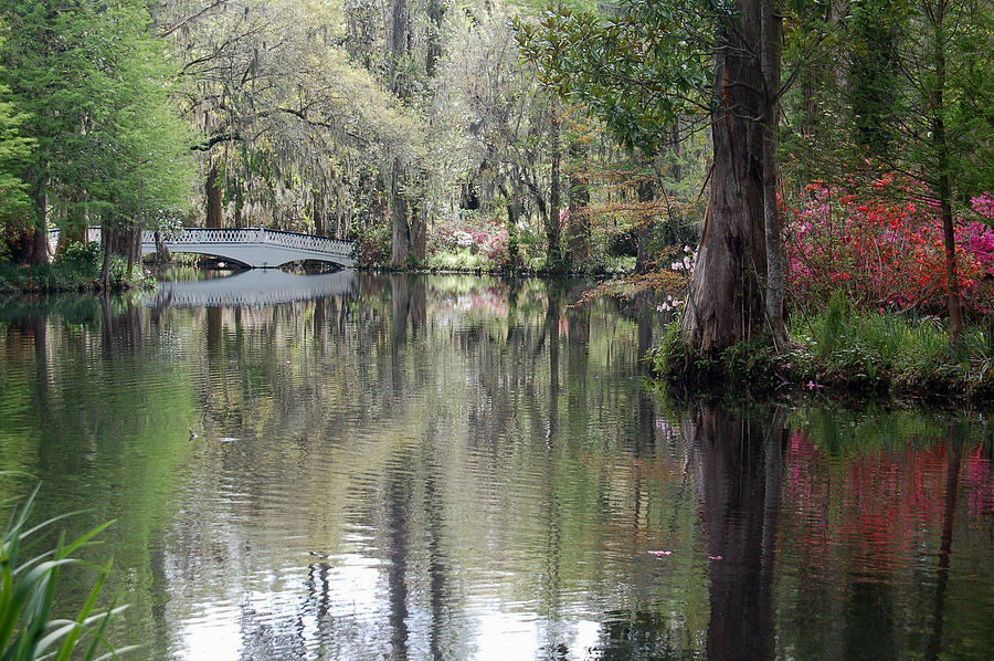 Magnolia Plantation Gardens Series II Photograph