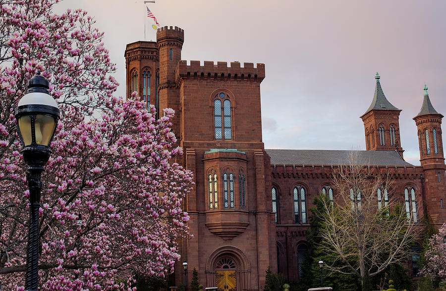 Magnolias Near The Castle Photograph
