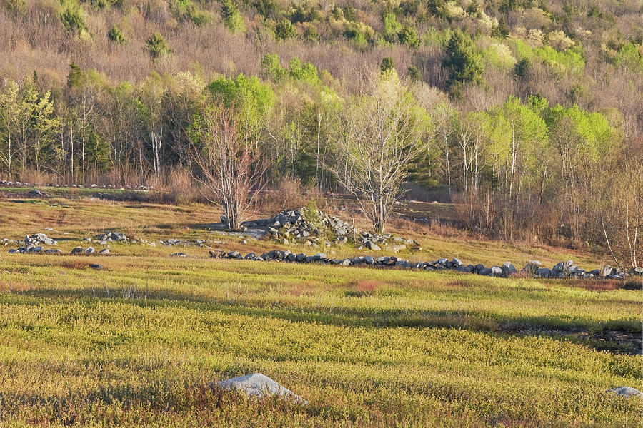 Maine Blueberry Field In Spring Photograph