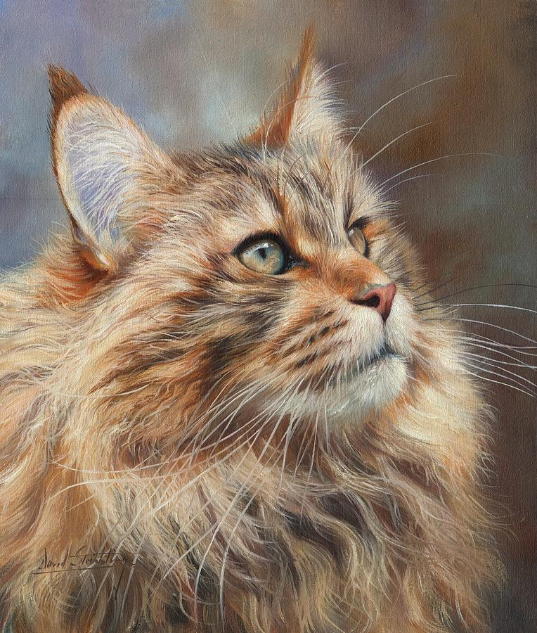 Maine coon cat painting by david stribbling for Cat paintings on canvas
