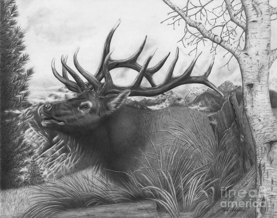 Majestic Bull Elk is a drawing by Barb Schacher which was uploaded on ...
