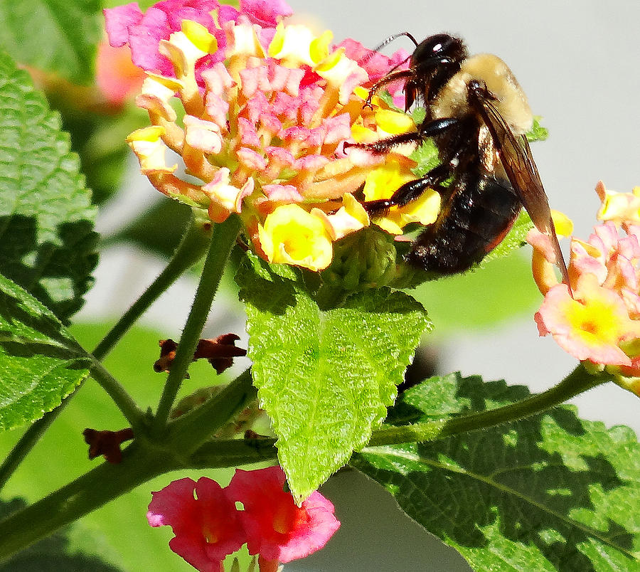 Making Honey Photograph