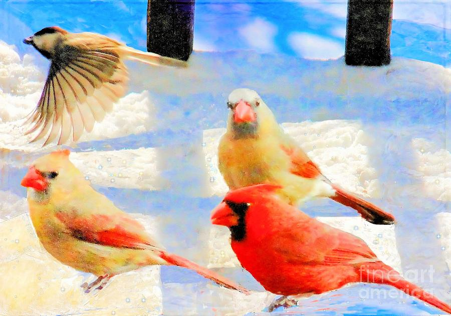 Male Cardinal With Two Females And Junco Photograph