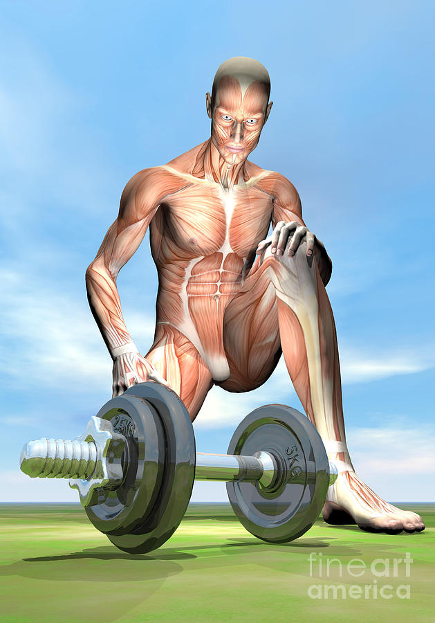 Male Musculature Looking At A Dumbbell Digital Art
