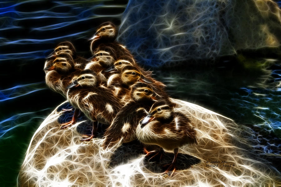 Mallard - 9525 - F Digital Art