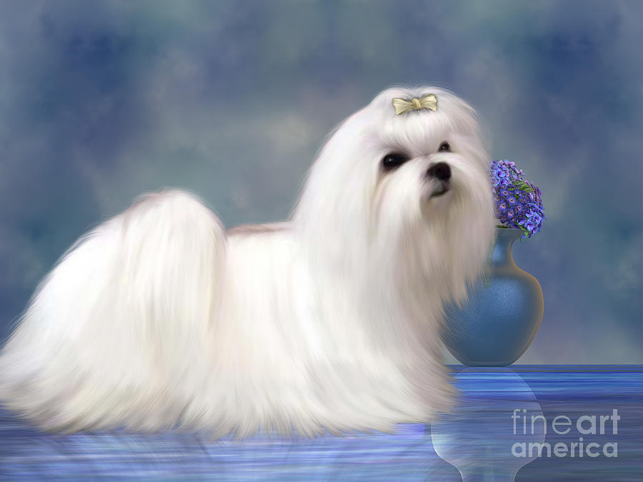Maltese Dog Painting