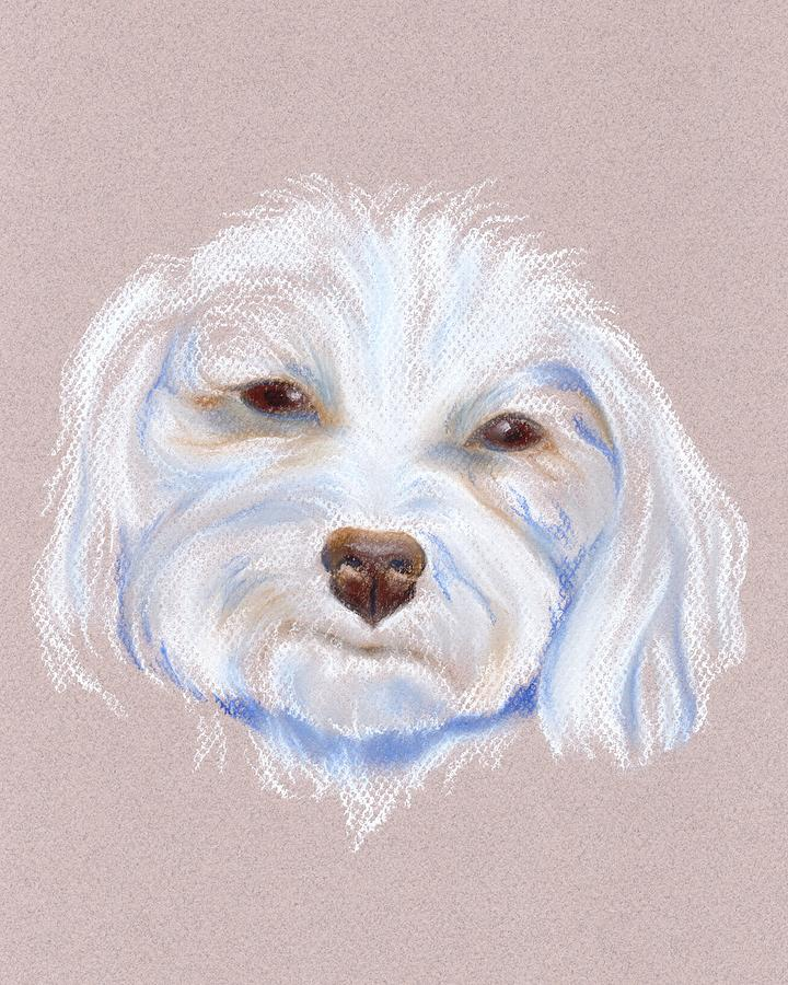Maltipoo With An Attitude Pastel