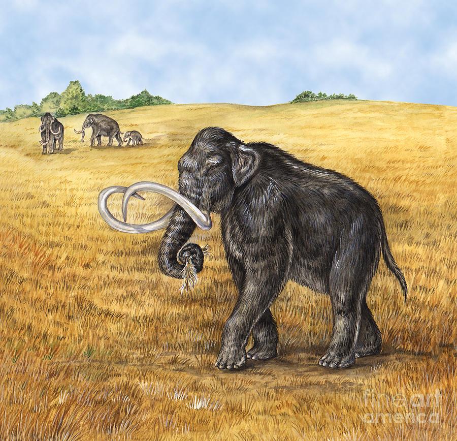 Mammoth Photograph