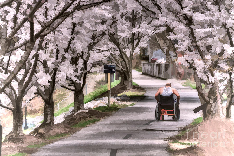 Man In Wheelchair Under Cherry Blossoms Photograph