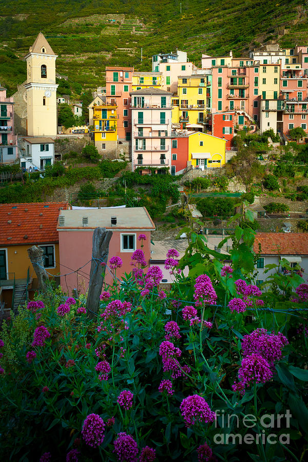 Manarola Flowers And Houses Photograph  - Manarola Flowers And Houses Fine Art Print
