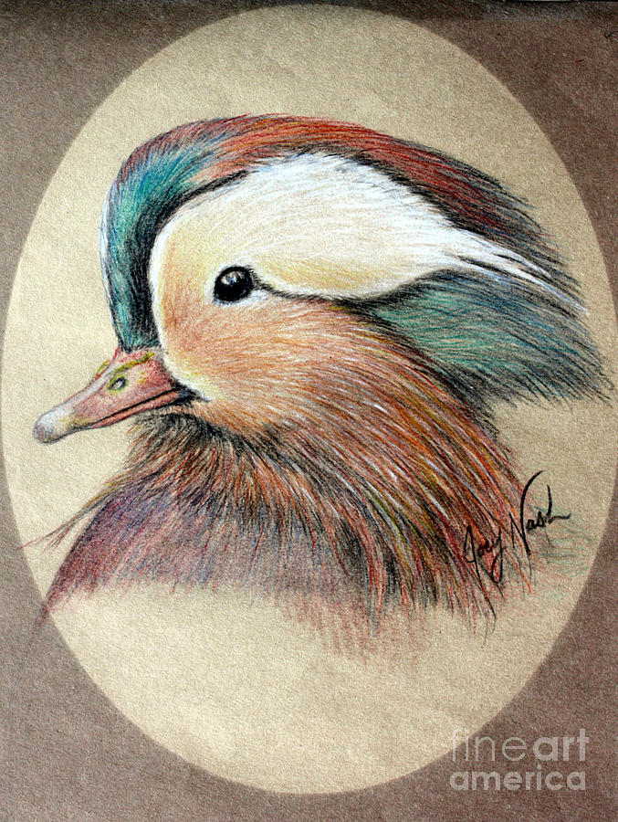 Mandarin Wood Duck Painting  - Mandarin Wood Duck Fine Art Print