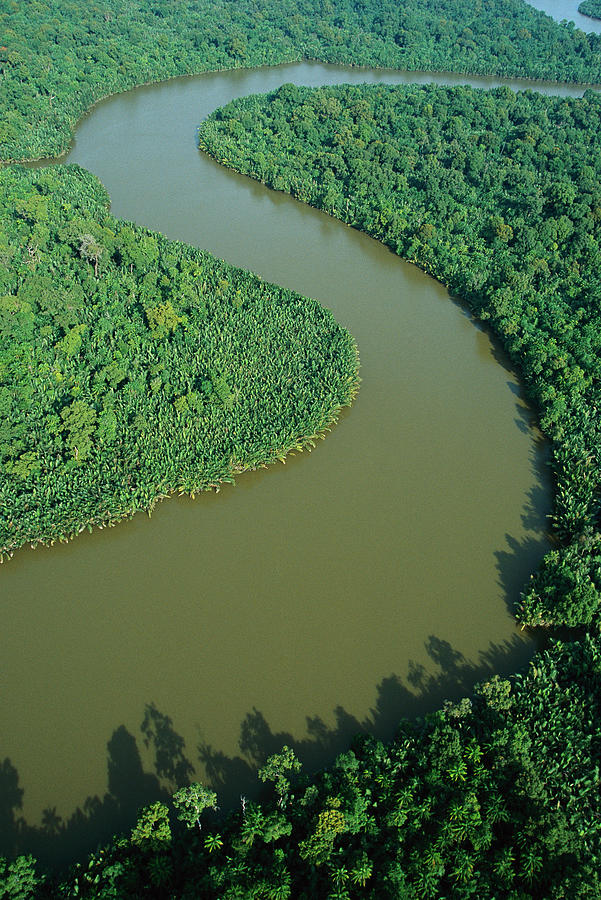Mangrove Rhizophora Sp In Mahakam Delta Photograph