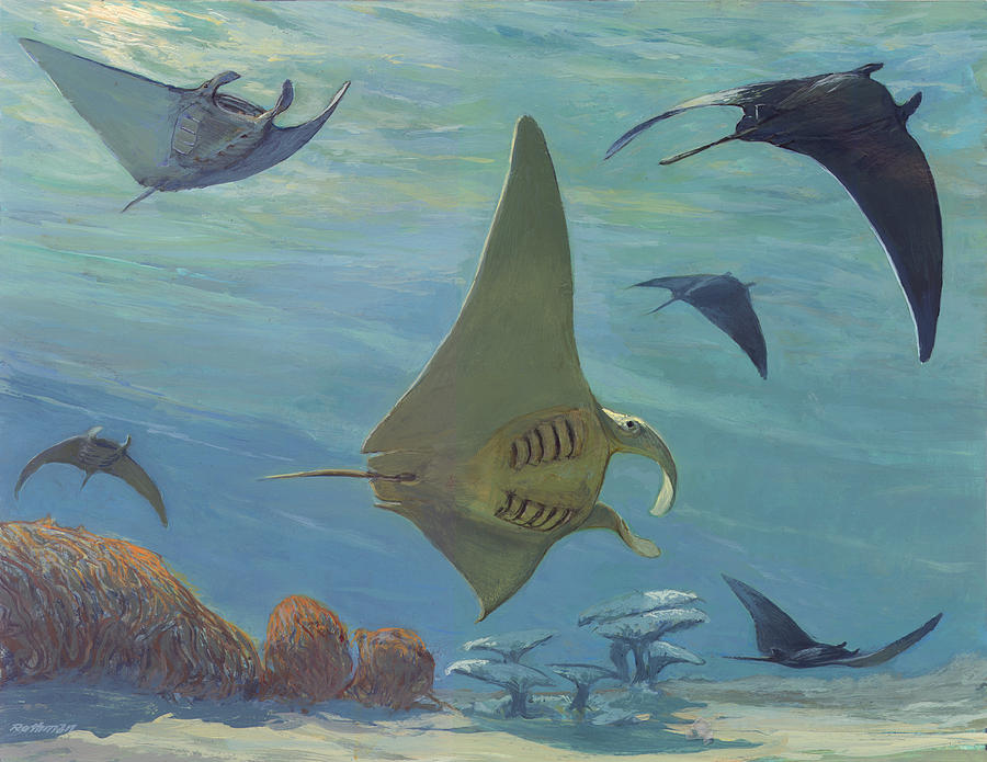 Wildlife Painting - Manta Ray by ACE Coinage painting by Michael Rothman