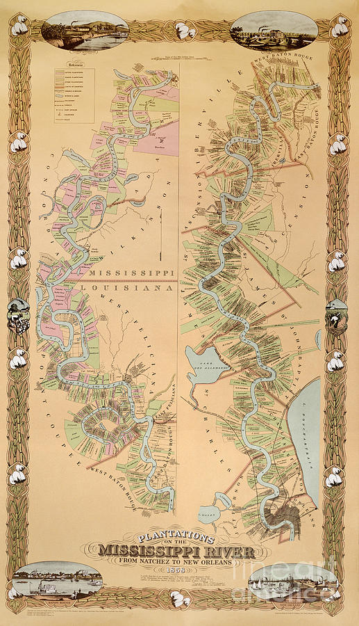 Map Depicting Plantations On The Mississippi River From Natchez To New Orleans Drawing