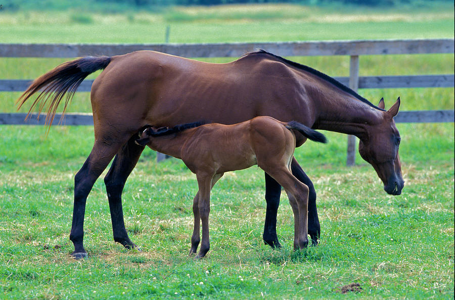 Mare And Foal Photograph