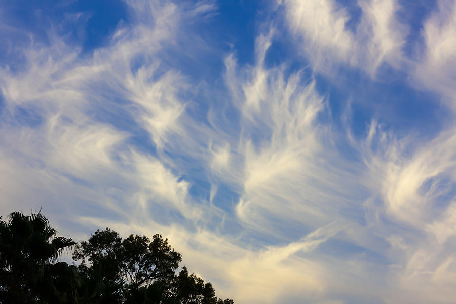 Mares Tail Photograph