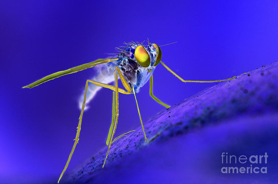 Mars Has Flies Photograph  - Mars Has Flies Fine Art Print